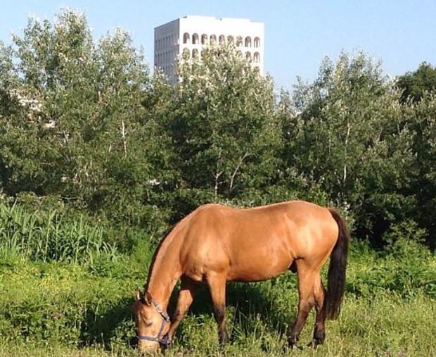 roma-eur-cavalli-magliana