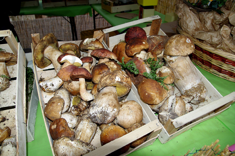 Risultati immagini per sagra funghi porcini