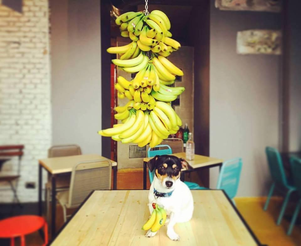 leccomilano-unbucodibar-banane-cane