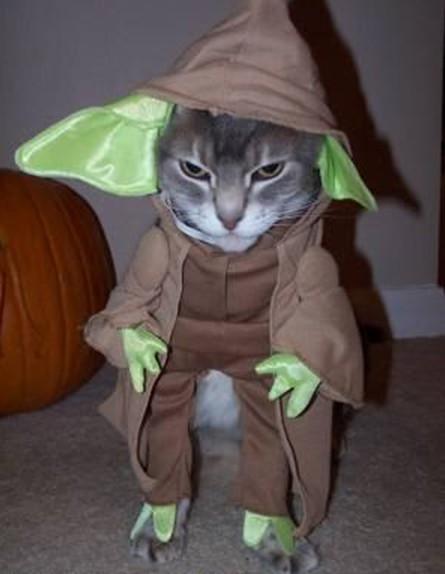yoda-cat
