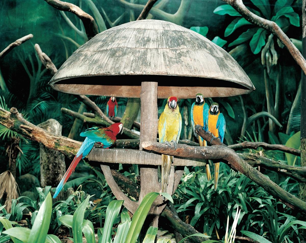 ReN_002033_3_B2 Parco degli uccelli di Jurong, Singapore, 1999