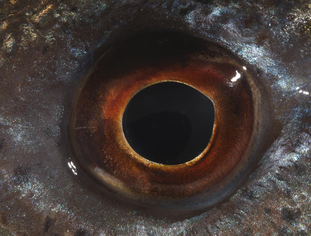 black gold 2016, Lambda print, 140x 184 cm unique edition, Courtesy FL Gallery