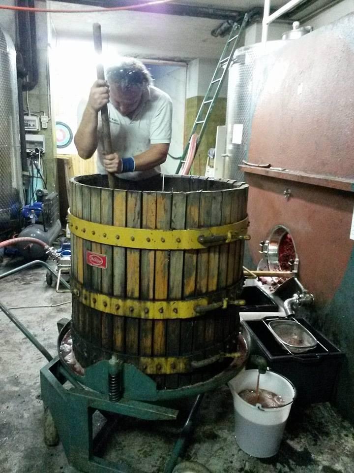 Dalla vigna alla cantina tutti i processi vinicoli sono curati da Silvio