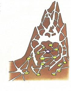 Carte Mutaforma: Case delle formiche