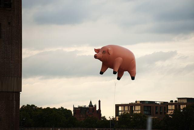 porco quattro