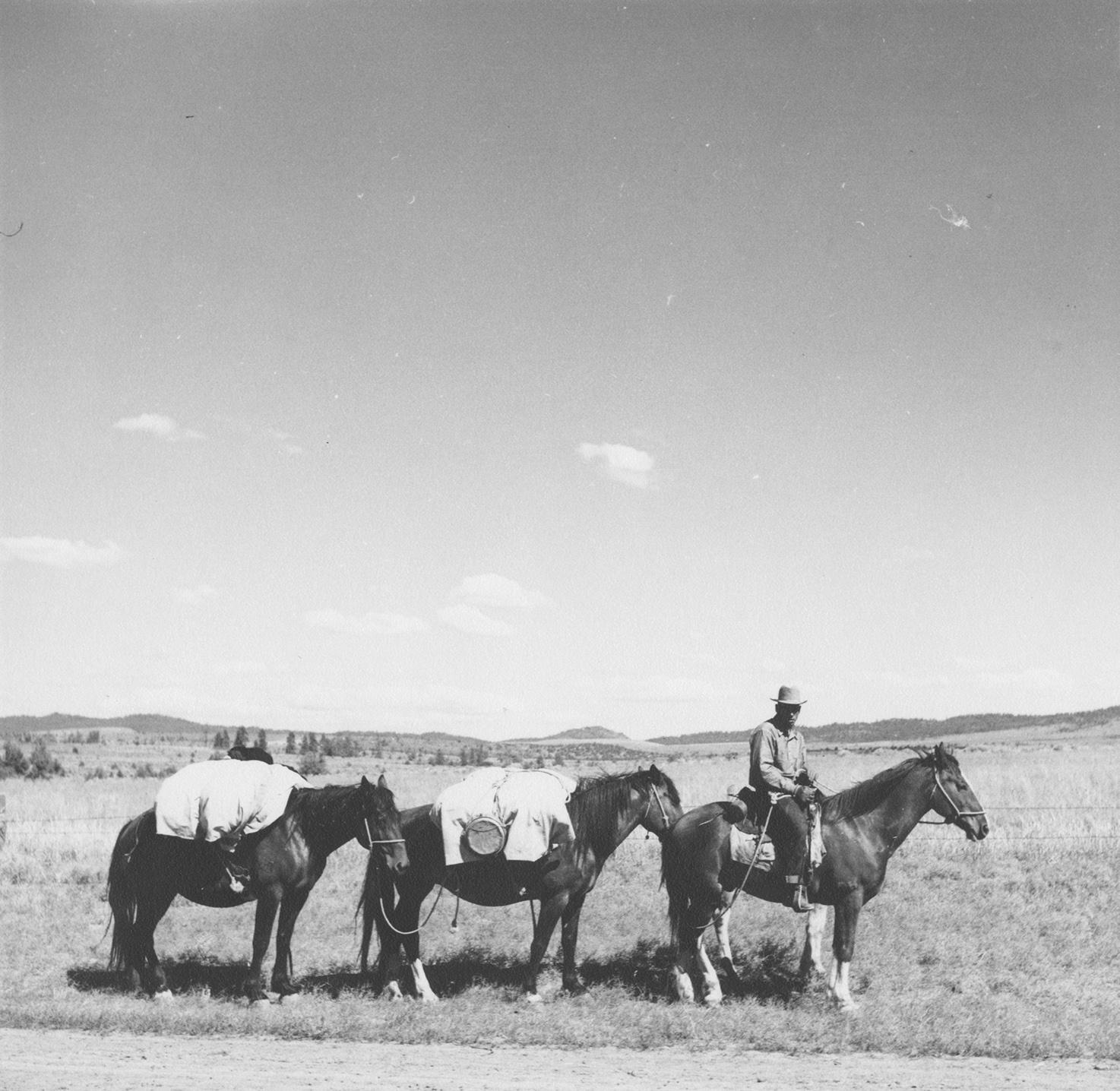 Arthur Rothstein: Sheep herder on trail, Madras, Ore., July 1936