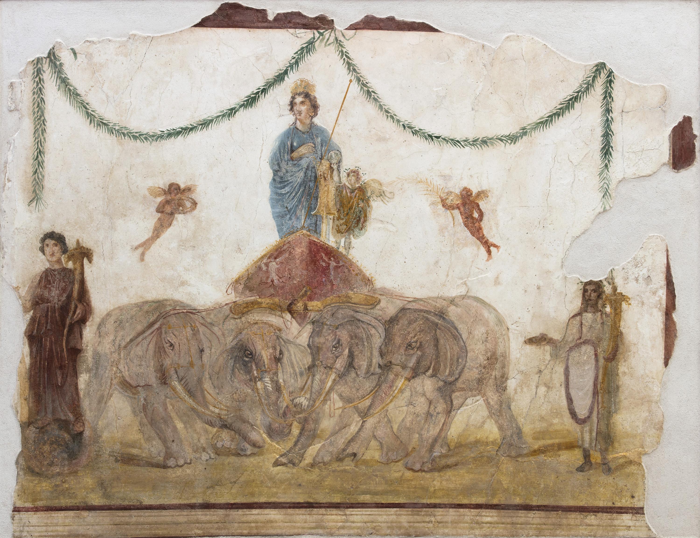 Venere su quadriga trainata da quattro elefanti I sec. d.C. affresco Pompei, officina di Verecundus (IX 7,7) Courtesy Parco Archeologico di Pompei Foto © Amedeo Benestante