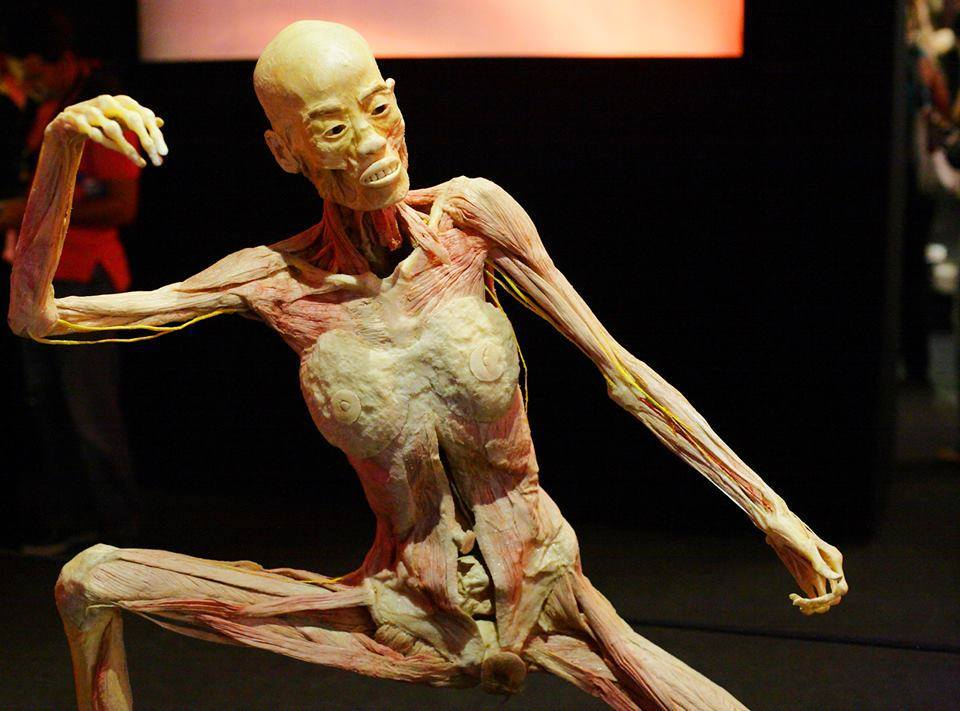 Human Bodies The Exhibition Zero