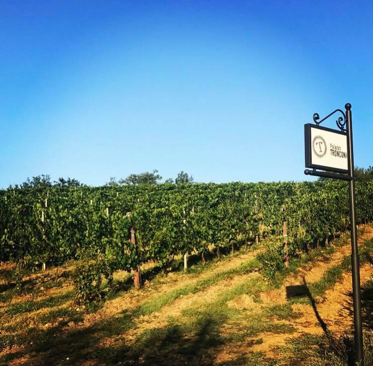 Le Vigne dell'Azienda Agricola Biodinamica Palazzo Tronconi, tra i produttori del Lazio presenti a Vignaioli Natuali 2017.